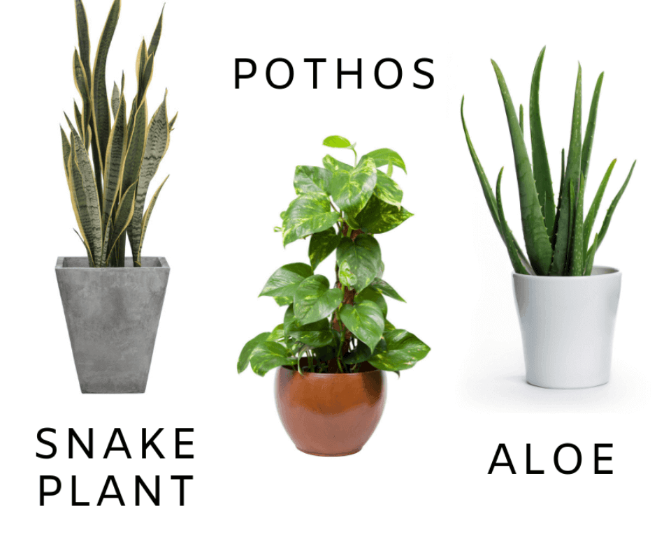 Yes Even You Can Grow Houseplants