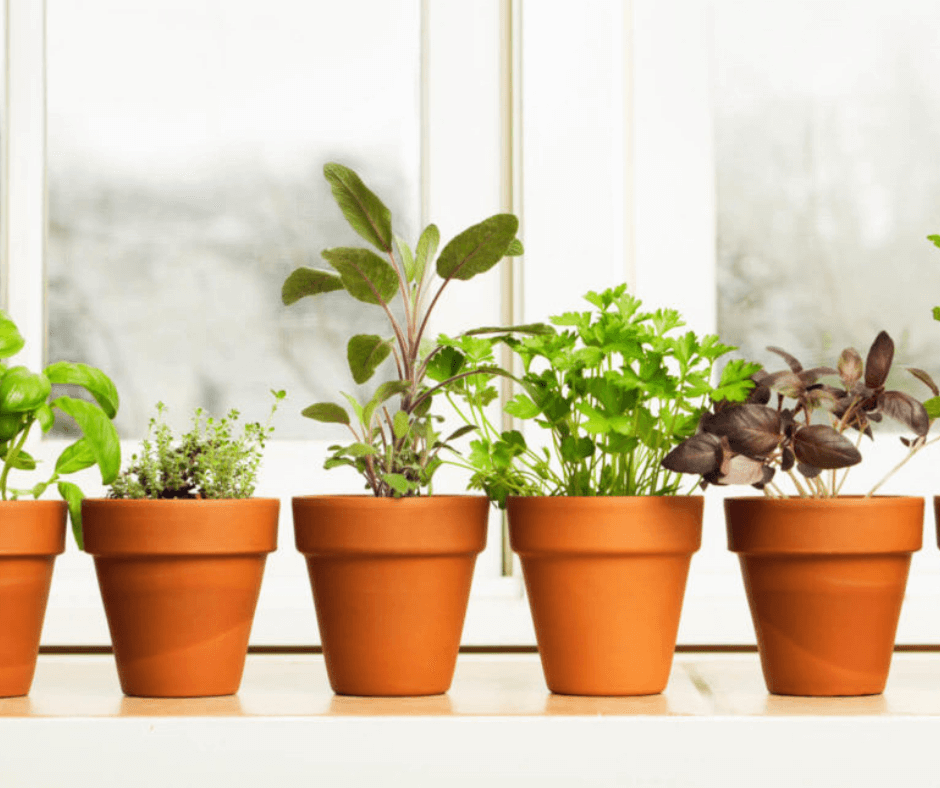 Grow Herbs In Your Apartment