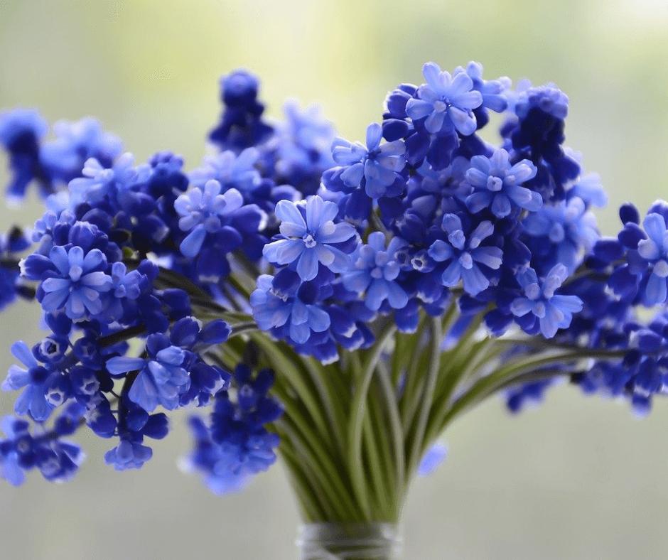 Fresh Cut Flowers FB