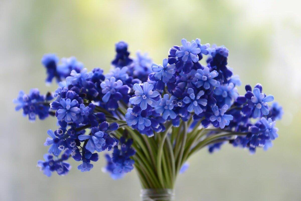 Fresh cut flowers in a vase
